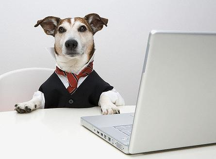 are pets a good idea in the workplace